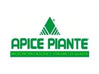 Apice Piante