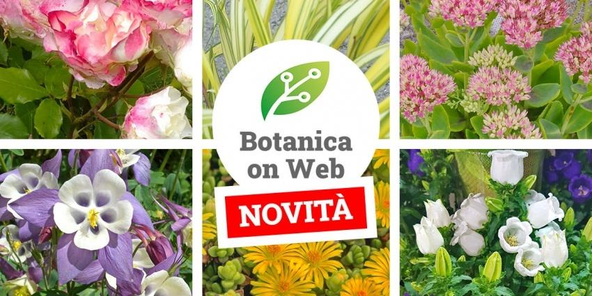 L'archivio piante di Botanica on Web è in continuo aggiornamento!